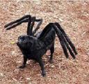 halloween_dog_spider.jpg
