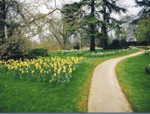 daffodile-3
